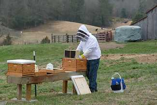 Installing New Honey Bee Packages
