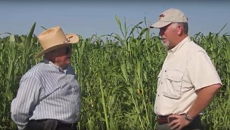 Multi-Species Cover Crops