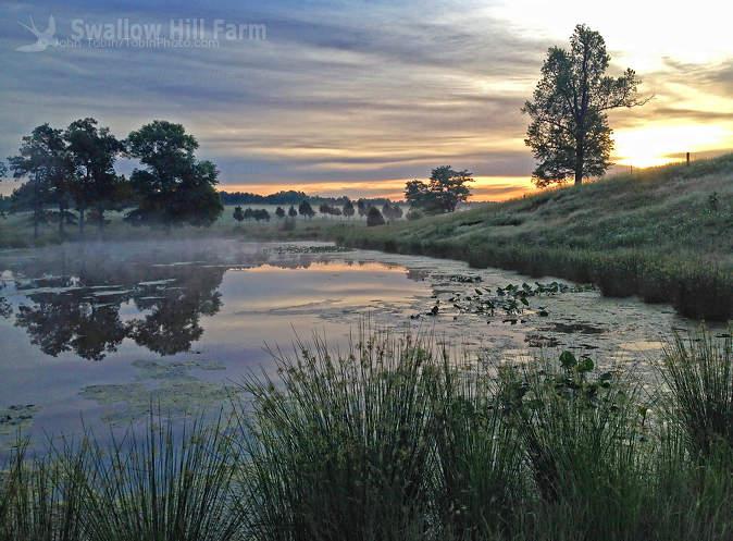 West Farm Pond