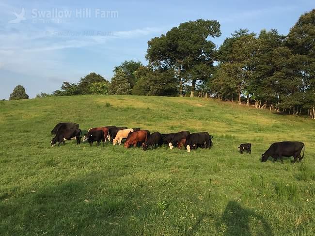 Grassfed Grassfinished Beef