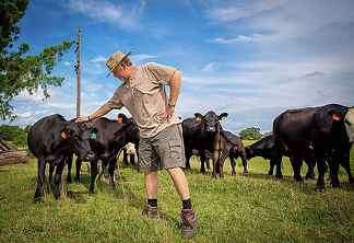 Grass Fed Angus Cattle