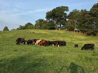 Grassfed Grassfinished Beef